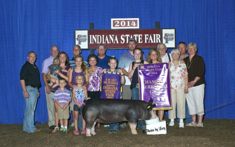 Ch. Berk & 6th Overall Gilt InSF-Littermate to Wedding Crasher